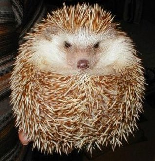 Logic: Prickly, But Pretty Much Irresistable